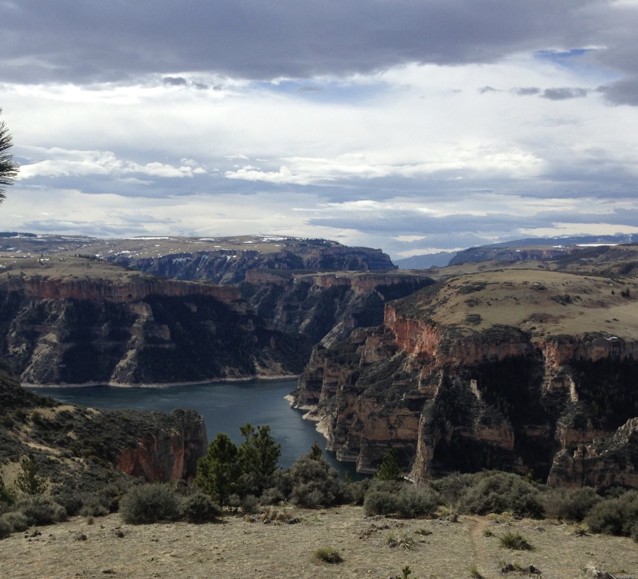 """Pretty Eagle"" - Professionally guided viewing in the Bighorn Lake and Canyon"